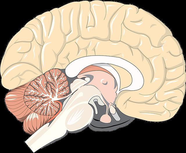 Der Hypothalamus – Warum reagiert er und was kann ich tun um die Zirbeldrüse zu aktivieren?