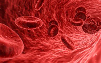 Praxisraum – Blut + Milz – inneres Gleichgewicht und Weiterentwicklung