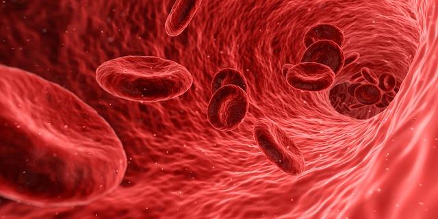 Blut + Milz – inneres Gleichgewicht und Weiterentwicklung