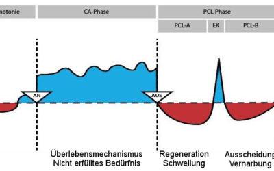 Notwendige Änderungen im Modell der 5 biologischen Naturgesetze