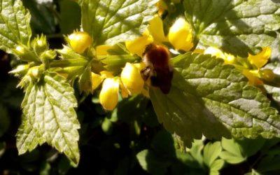 Wir holen die Bienen zurück – für die Zukunft unserer Kinder